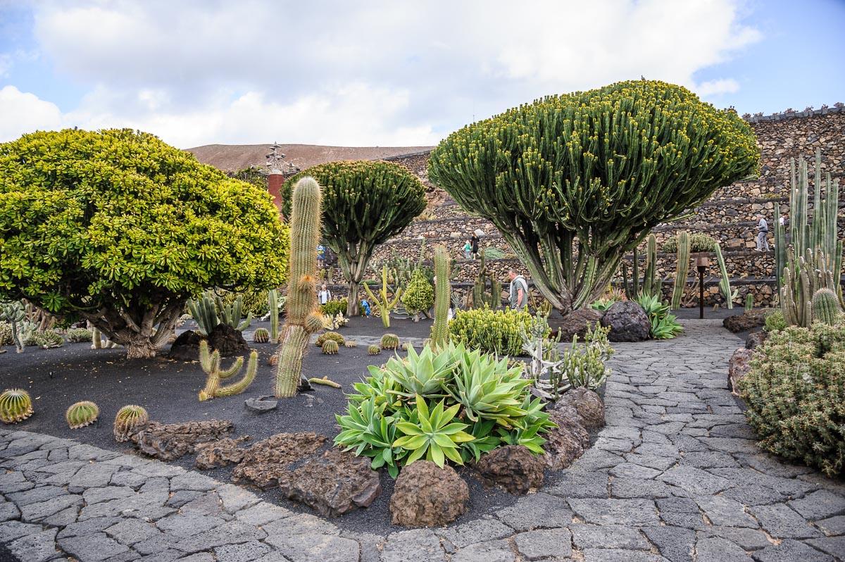 Jardin de cactus lanzarote fine art photography for Jardines con cactus